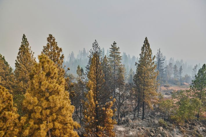 A photo taken from the historic Bloomer Hill fire lookout, which CAL FIRE managed to save, ...