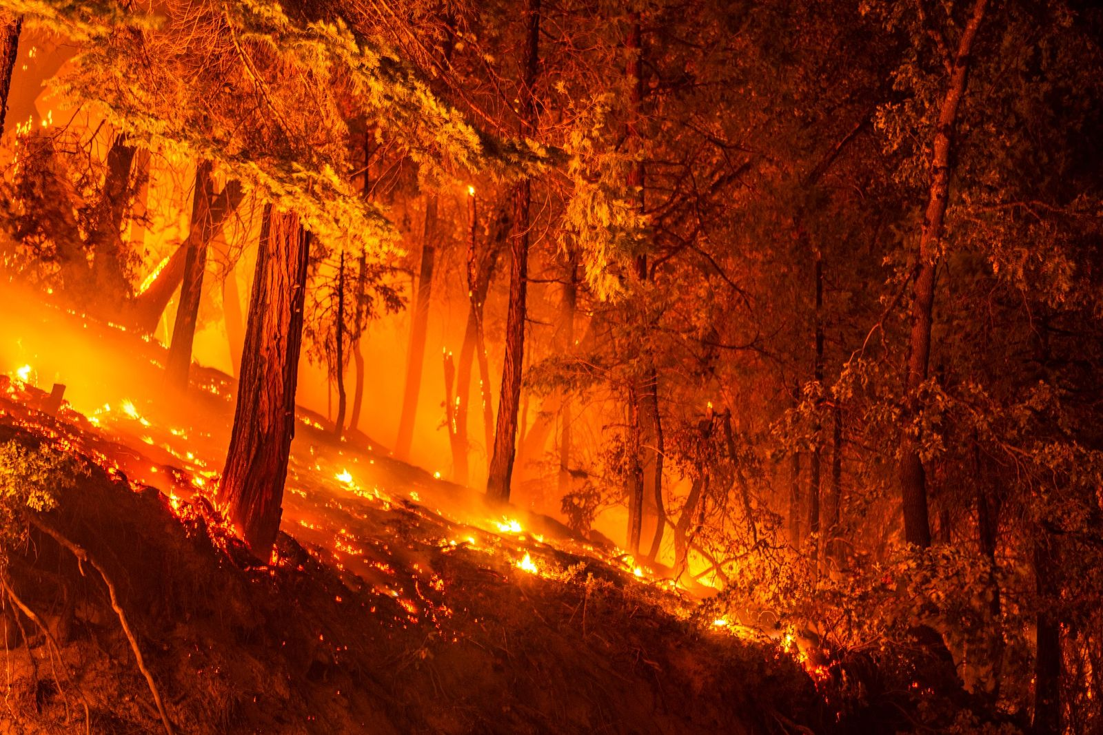 Many trees in the area had been previously killed by bark beetles, and fire crews have ...