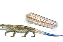 An artist's rendering of the reptile Captorhinus, with a tail that can detach if a predator ...