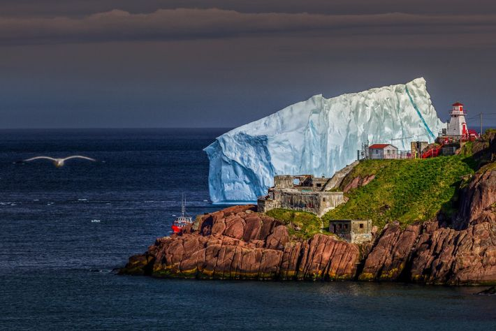 Each spring, massive 10,000-year-old icebergs break off from Arctic glaciers and make their way past the ...