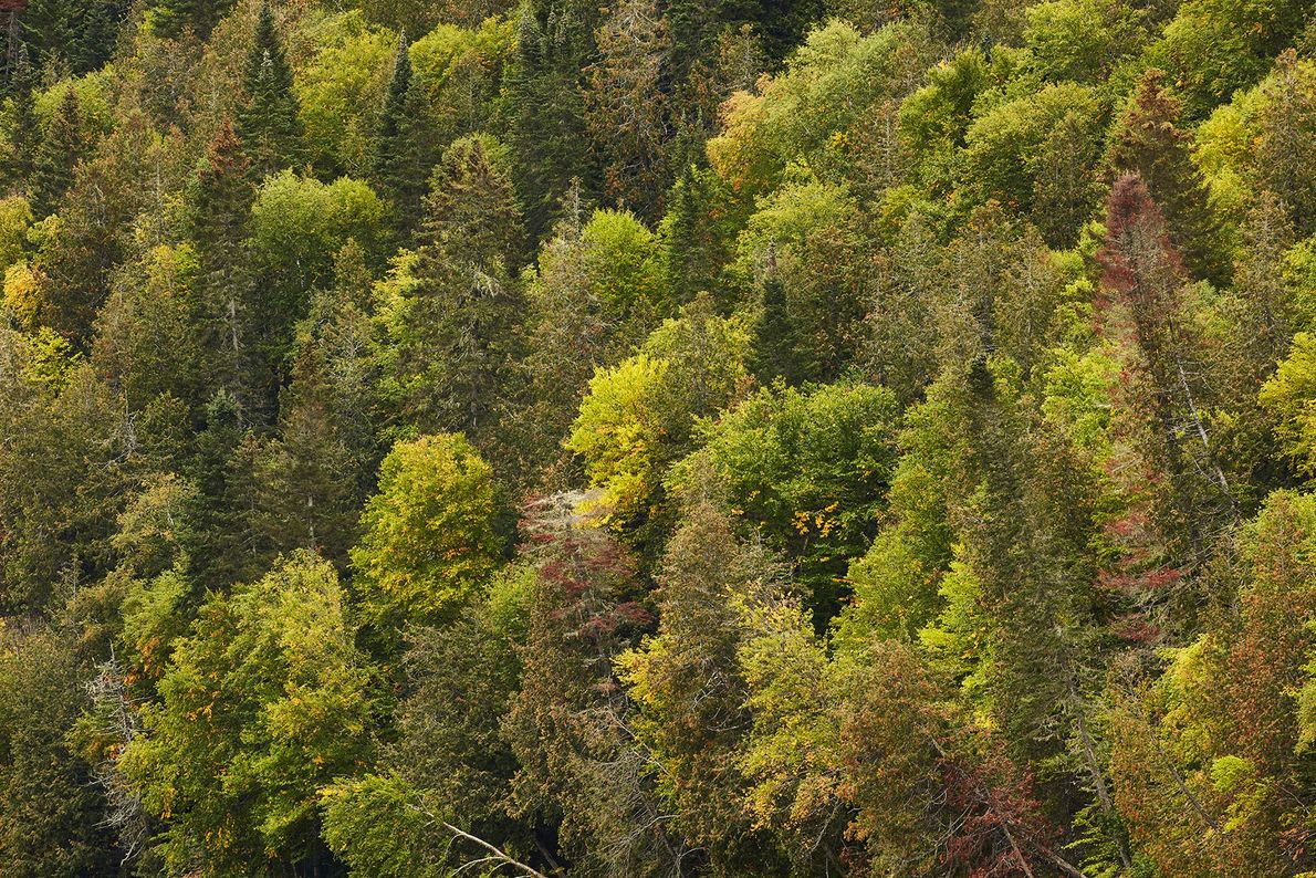 Aerial shot of the green around the Restigouche River.
