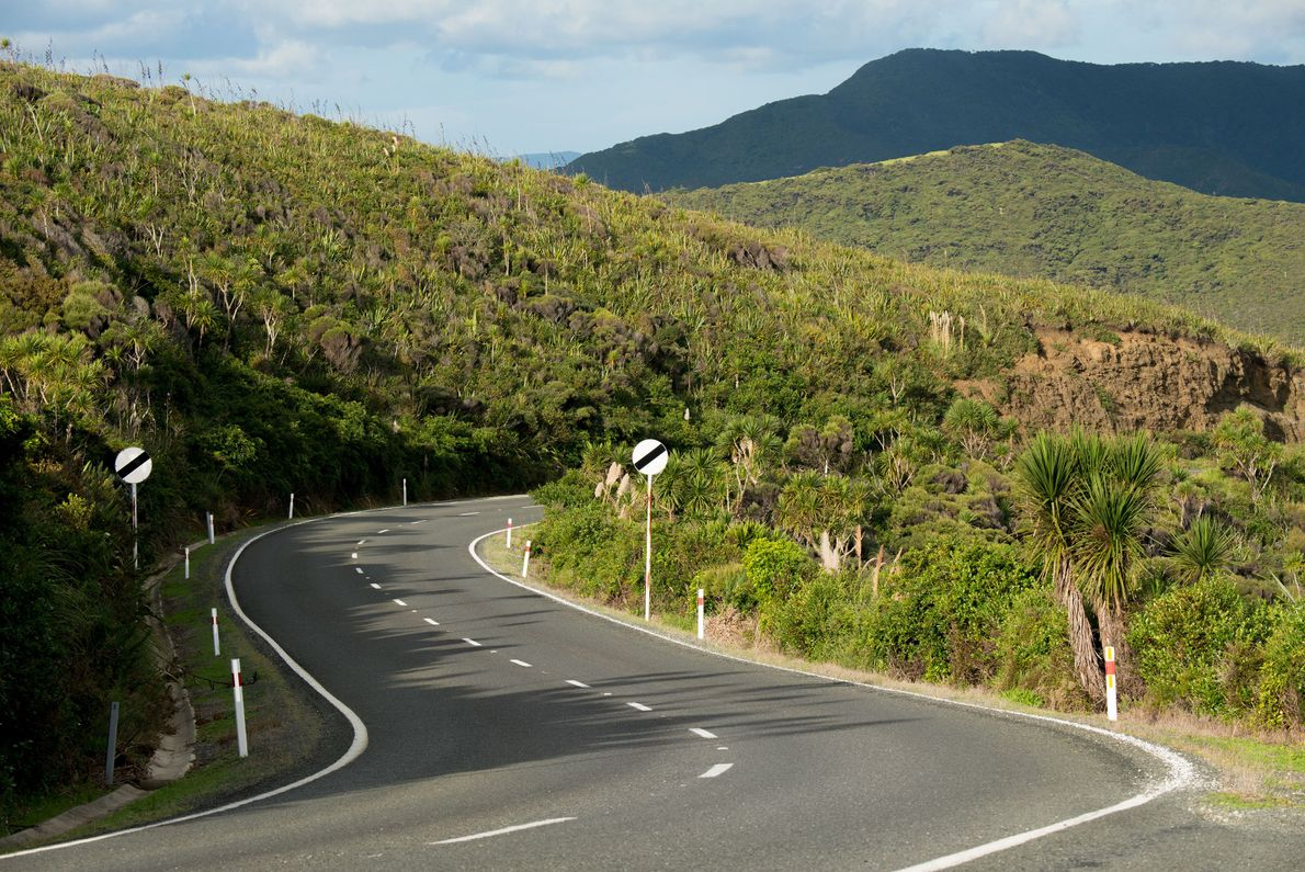 Drives through New Zealand include rolling hills, lush flora, and vistas that will have you pulling ...