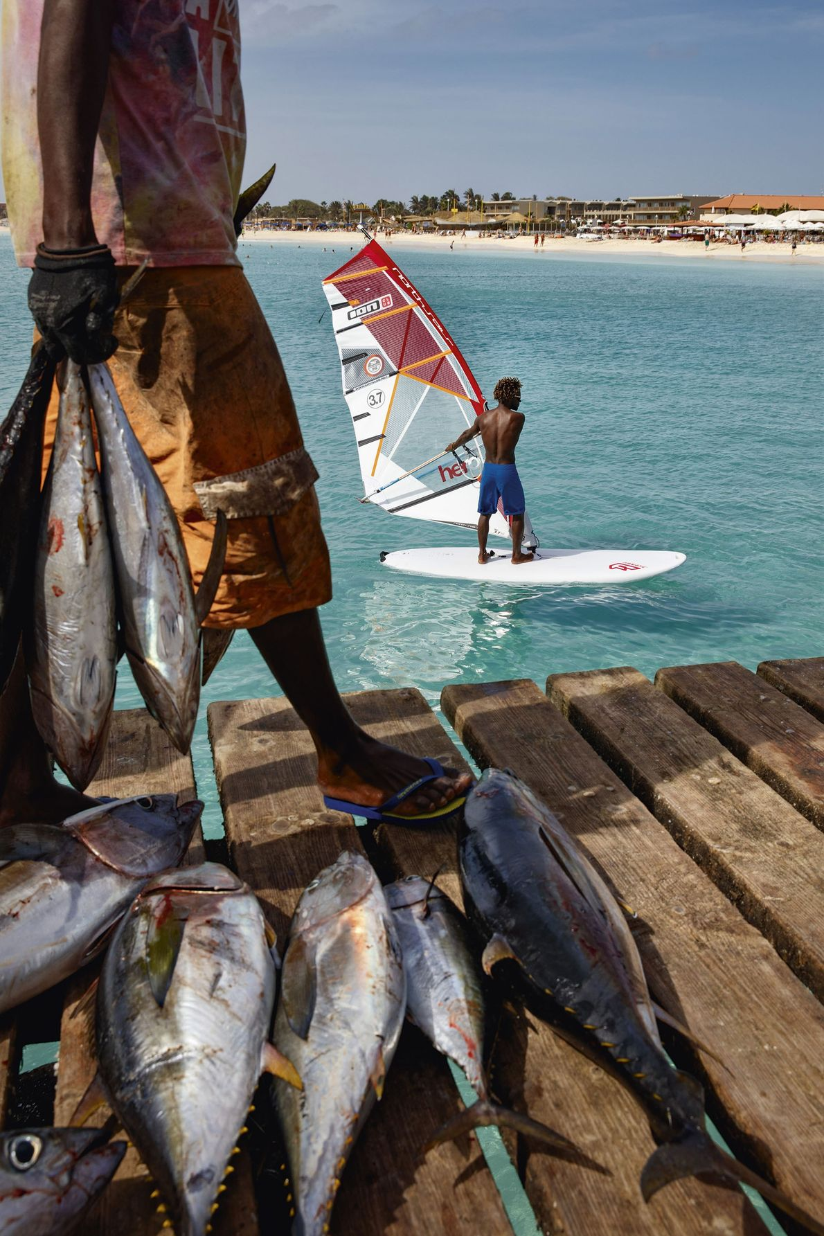 Windsurfing and the day's catch.