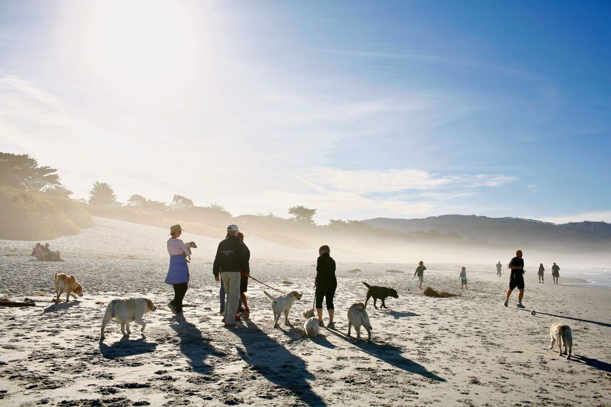 Visitors walk with their dogs along Carmel City Beach in California.
