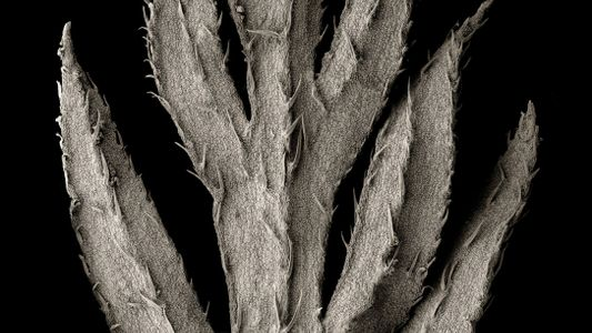 The hidden beauty of the plants that feed the world