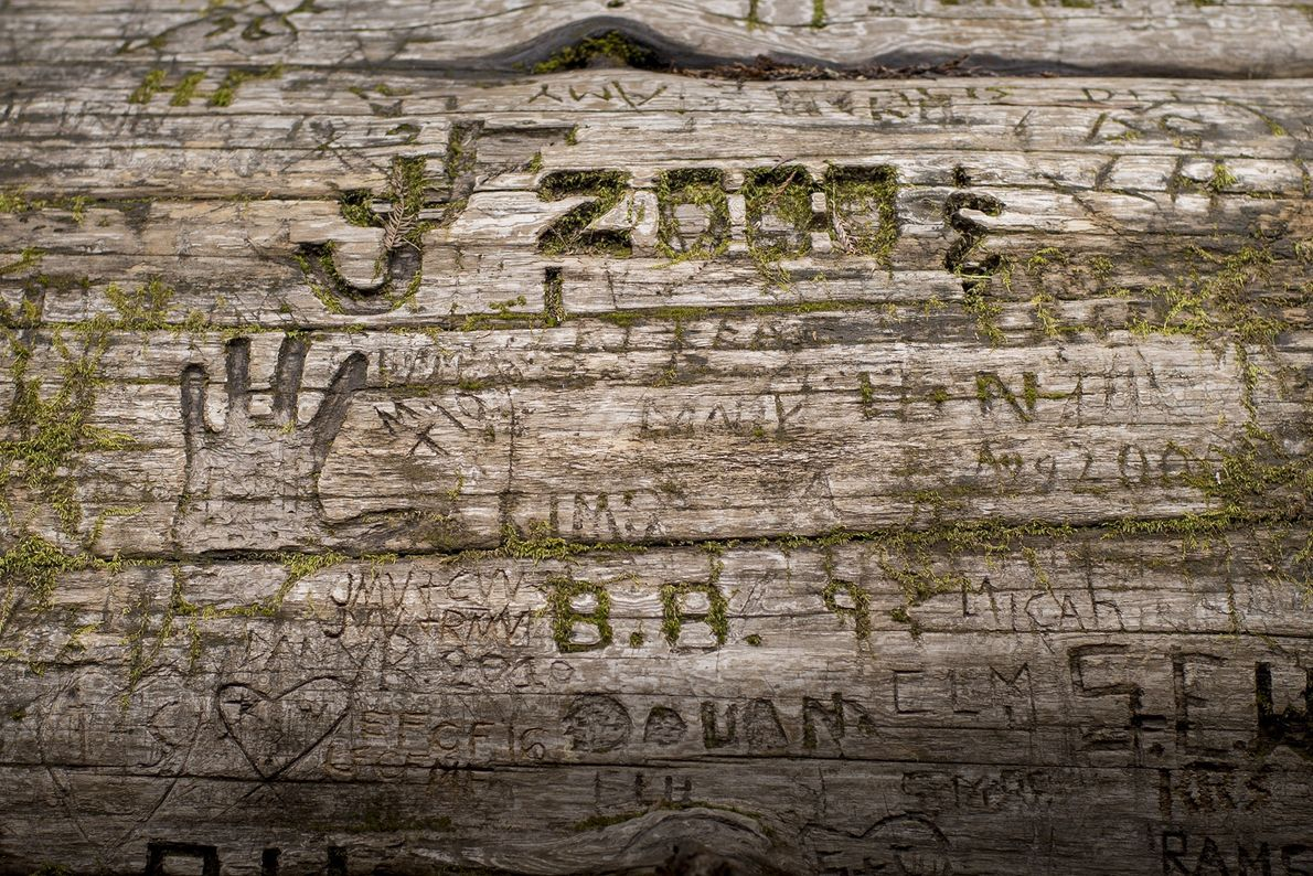 Initials, dates, and symbols are carved into the bark of a fallen redwood.