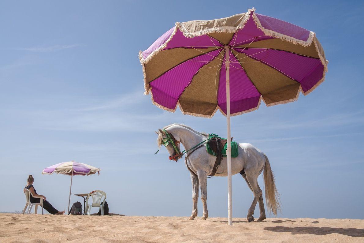 A horse suns himself near the Atlantic ocean.