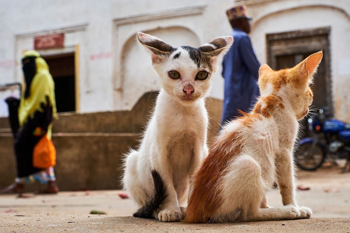 Kittens sit in Lamu Old Town, the oldest Swahili settlement in East Africa and a UNESCO ...