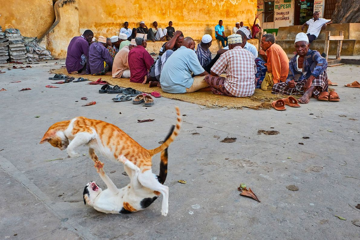 Cats play-fight beside indifferent residents of Lamu, Kenya.