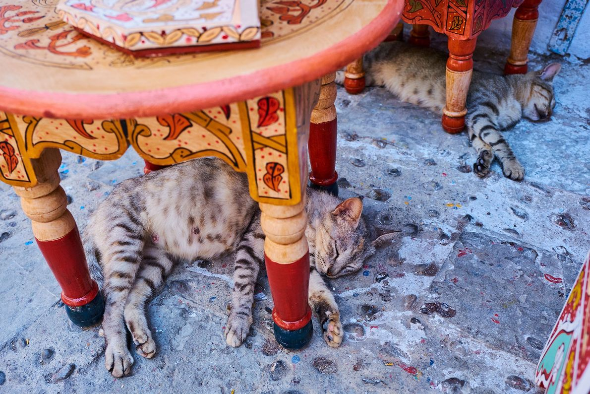 Sleeping cats pay no mind to humans walking by in the streets of Chefchaouen.