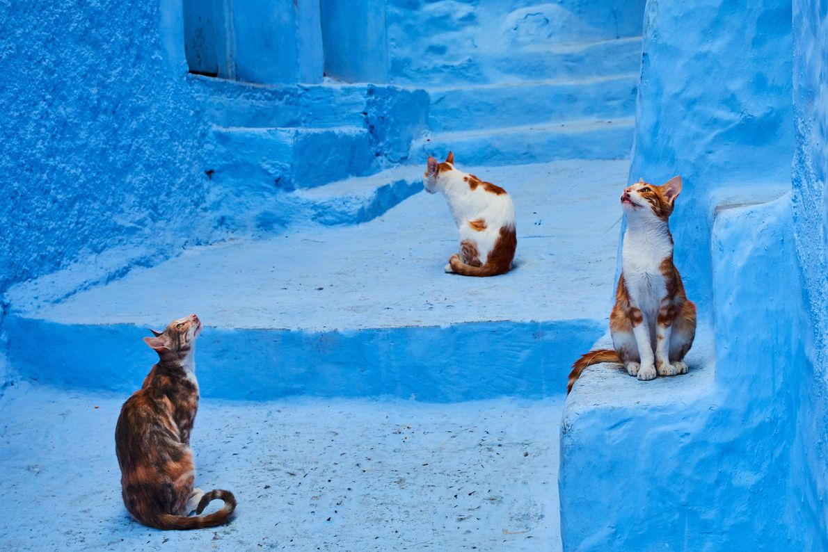 Cats observe their surroundings in Chefchaouen, Morocco.