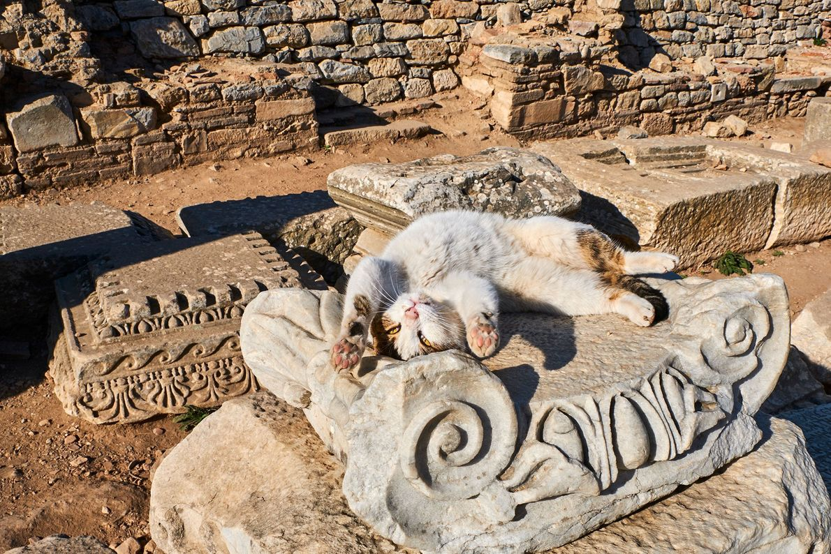 A playful cat stretches in the sun on Turkish ruins. Islam is the predominant religion in ...