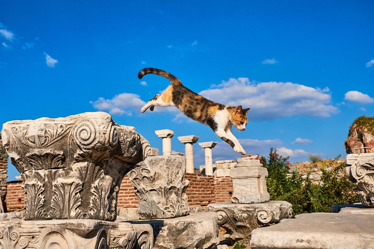 See the lives of street cats around the world