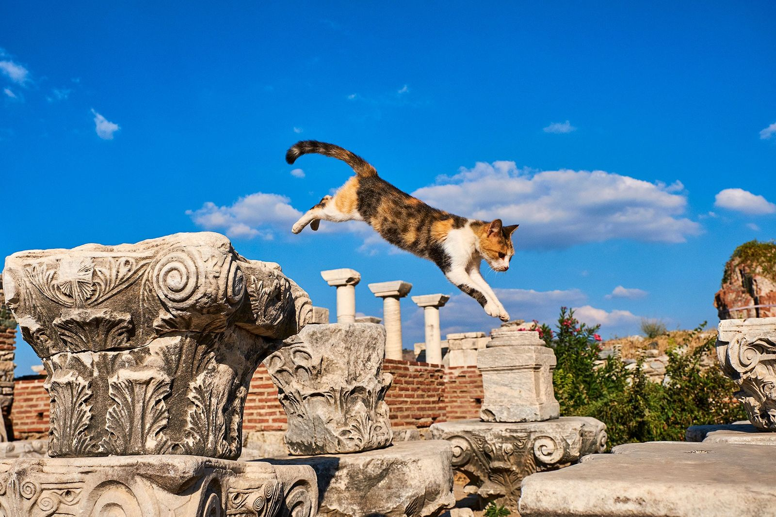 Ephesus, an ancient Roman port city, is home to countless felines. The photographer caught this calico ...