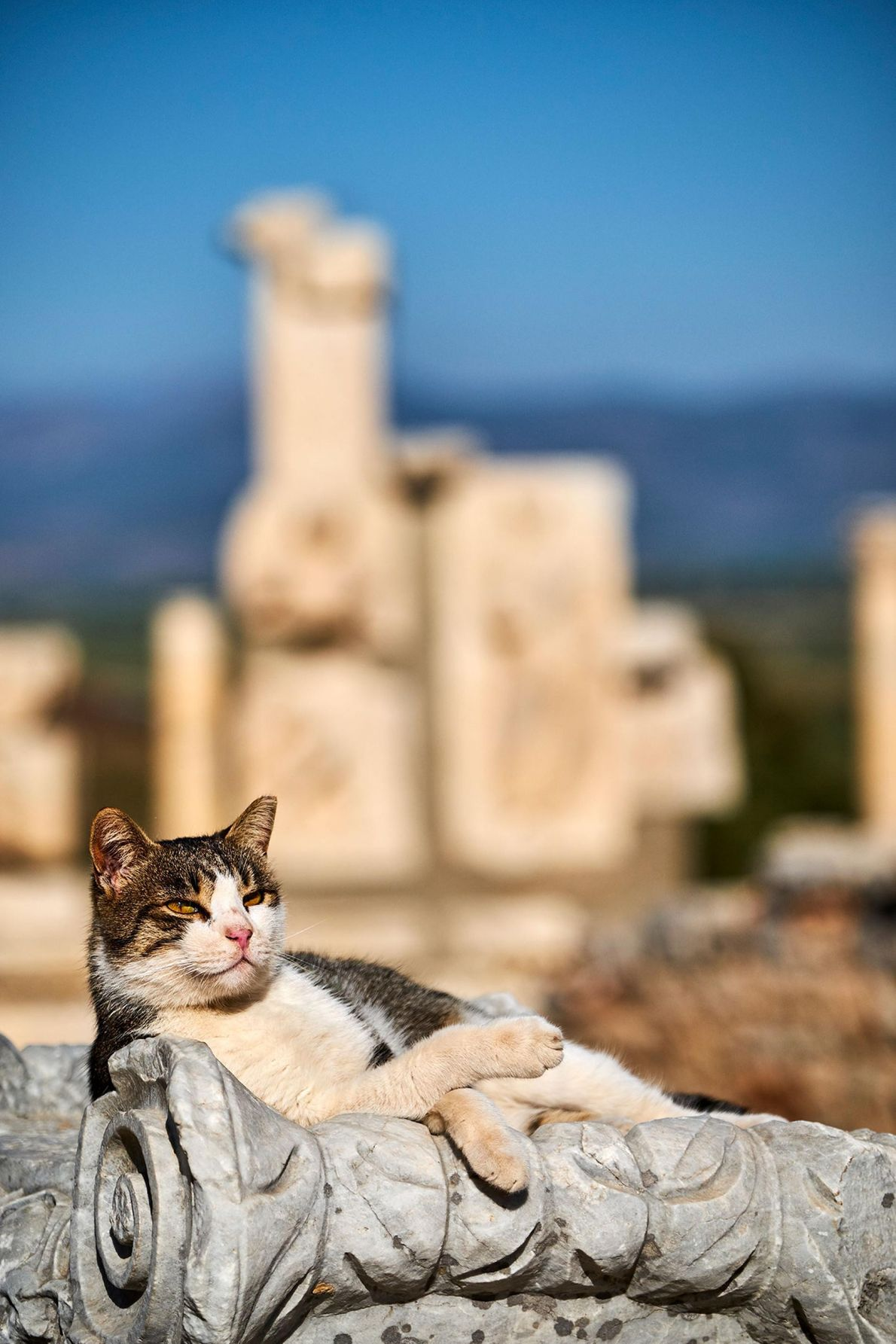 A cat relaxes against one of the ruins of the 2,000-year-old archaeological site of Ephesus, an ...