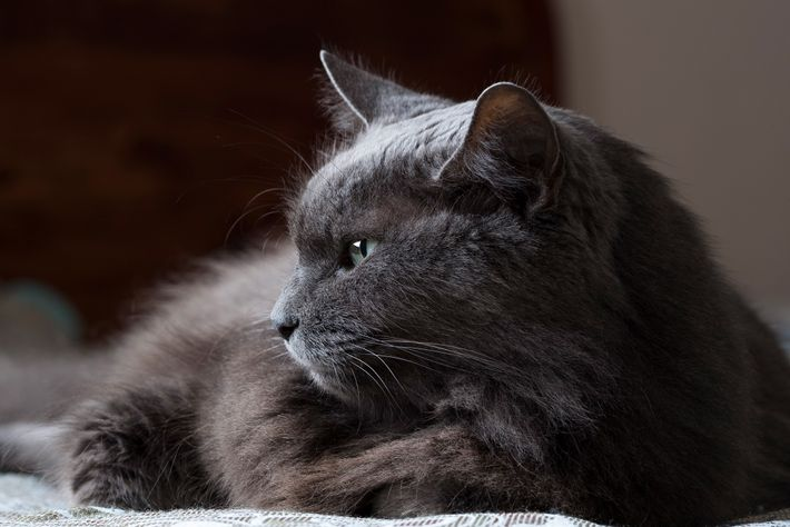Cats are often perceived as inscrutable, but they likely have subtle forms of communication that people ...