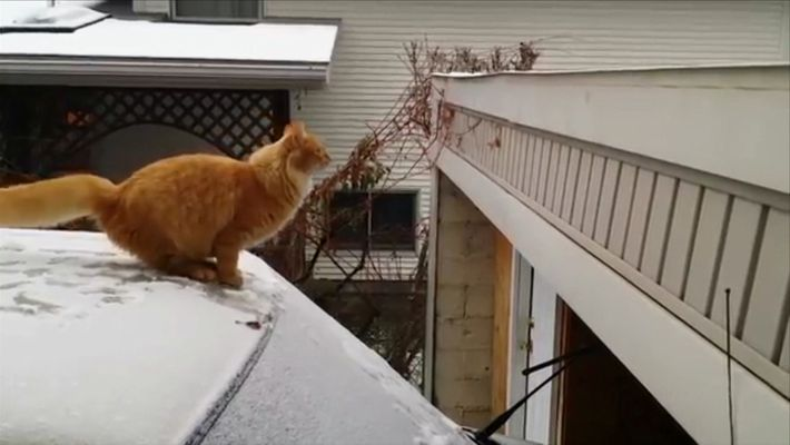 Cat fails