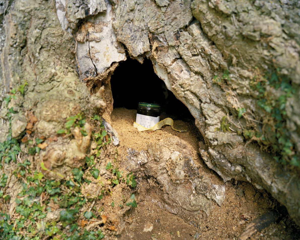 Kemble, Gloucestershire: A honey jar in a hollow, possibly an offering, at what has been suggested as source ...