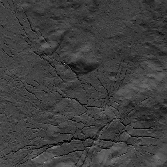 A fracture network on the floor of Occator Crater was imaged by NASA's Dawn spacecraft on ...