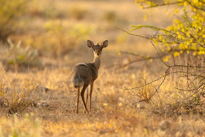 Somaliland is also trying to combat the illegal trade in other wild animals, such as the ...