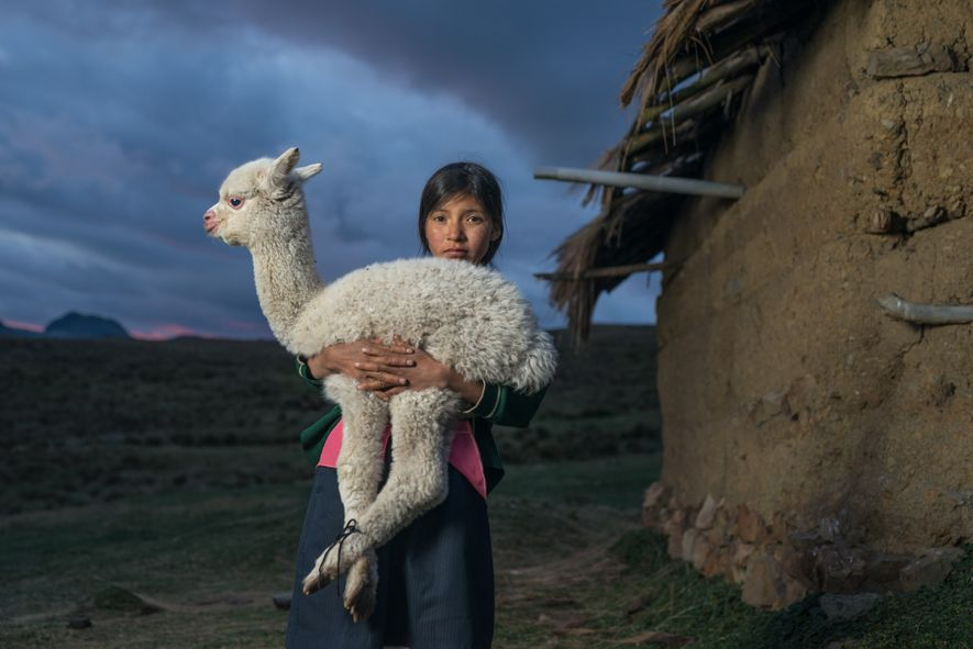 Fourteen year-old Danila holds a baby alpaca near Huaylillas in the highlands of northern Peru. Skeletal ...