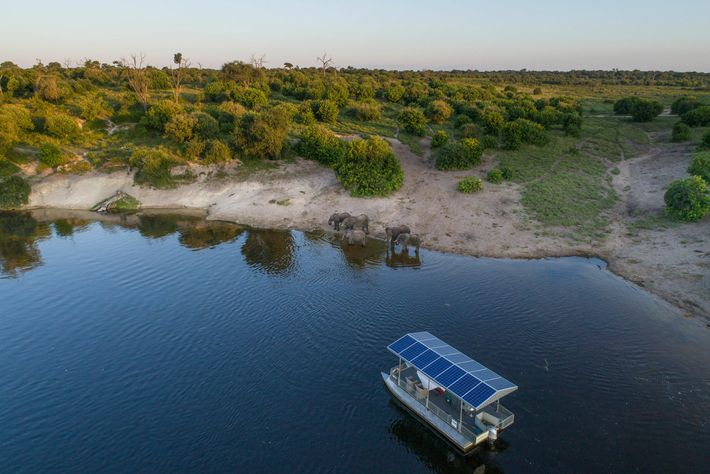 Travelling by electric safari vehicle and electric boat, the Chobe's Angelstake guests out into the bush ...