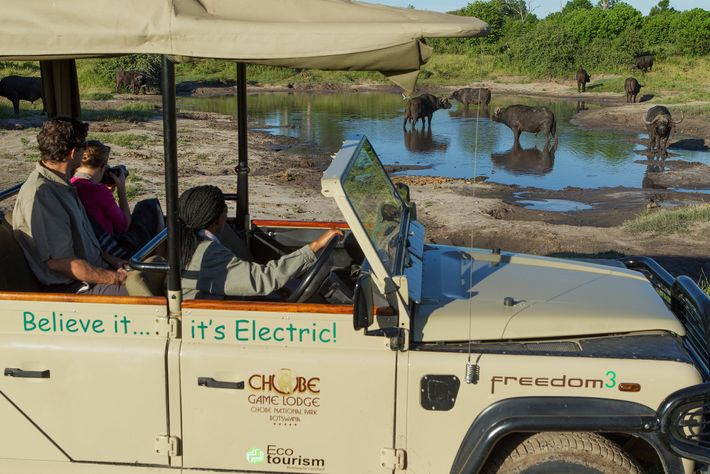 Chobe National Park, an expanse of fertile flood plains tucked into Botswana's northeast corner, is famous ...