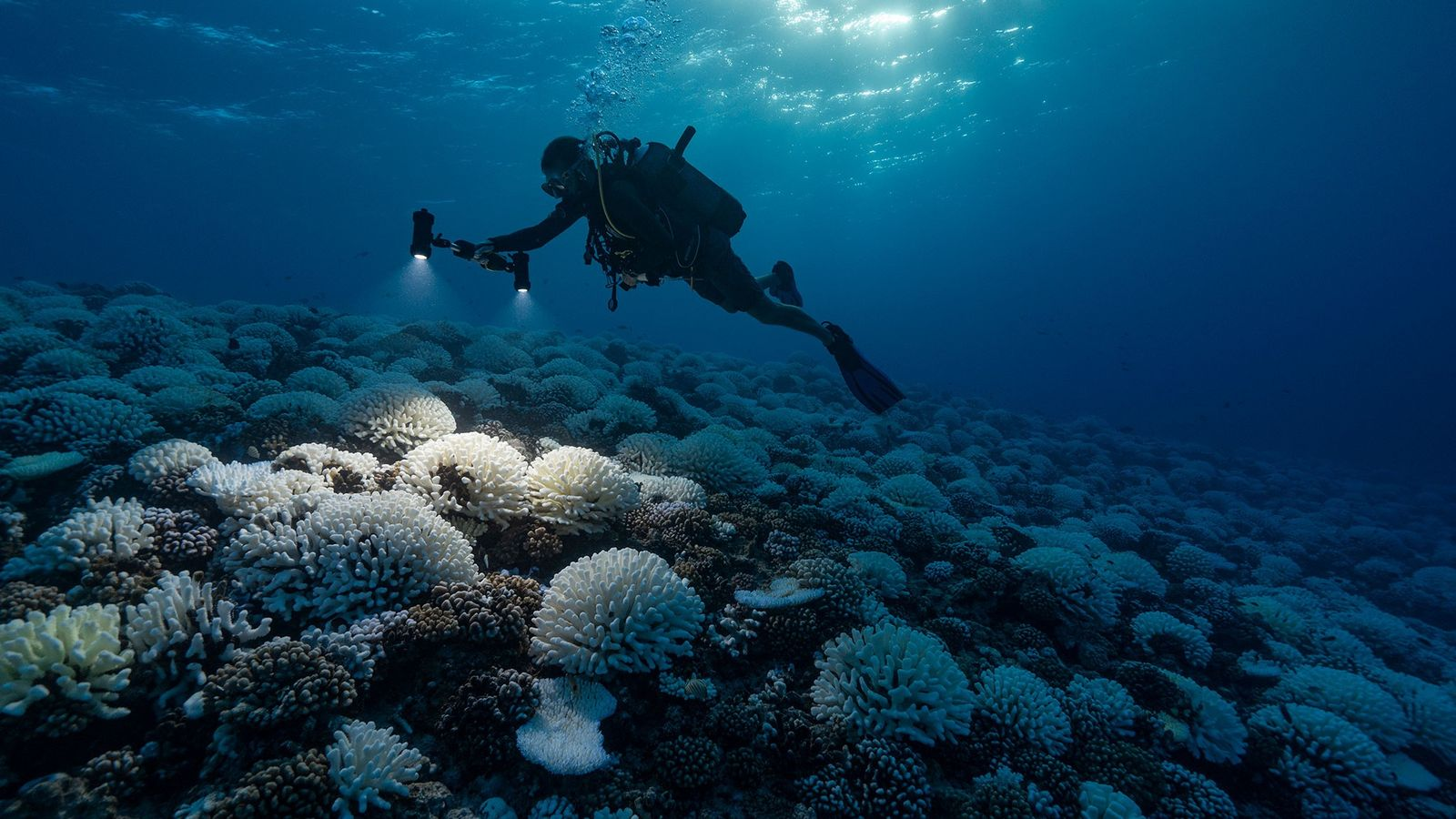 Oceans, and the corals that live in them, are under extreme stress from climate change, and ...