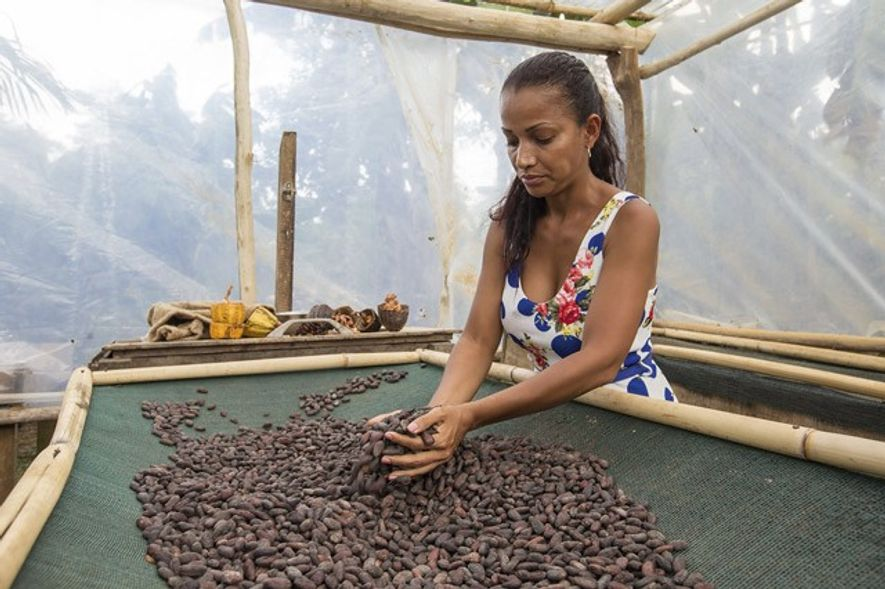 Vanessa Quiros turns drying cacao beans at the Rancho Raices cacao plantation