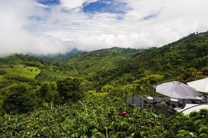Café San Alberto is set on a hillside above Buenavista. Image: Getty