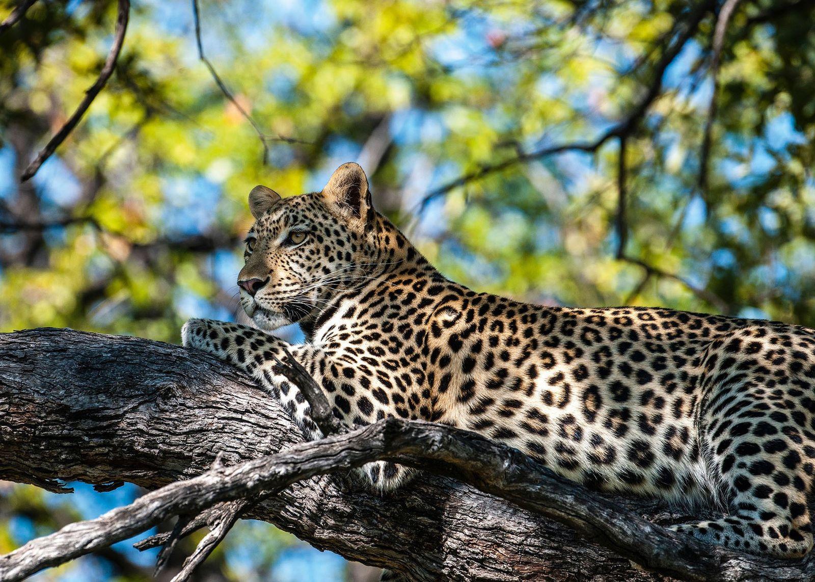 CLOSED: Win a six-night safari for two in Botswana
