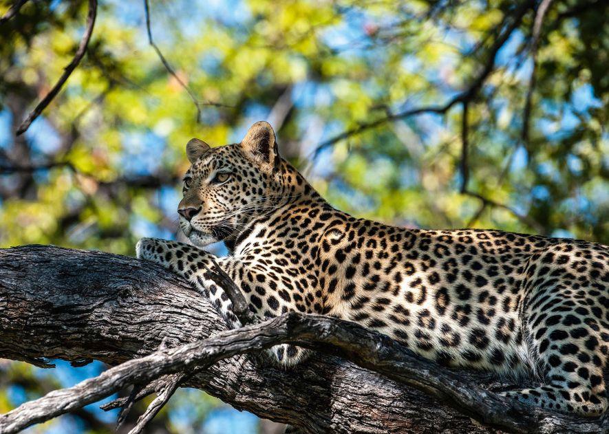 Win a six-night safari for two in Botswana