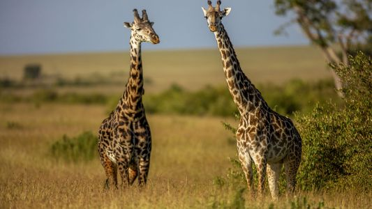 CLOSED: Win a six-night safari in the Maasai Mara