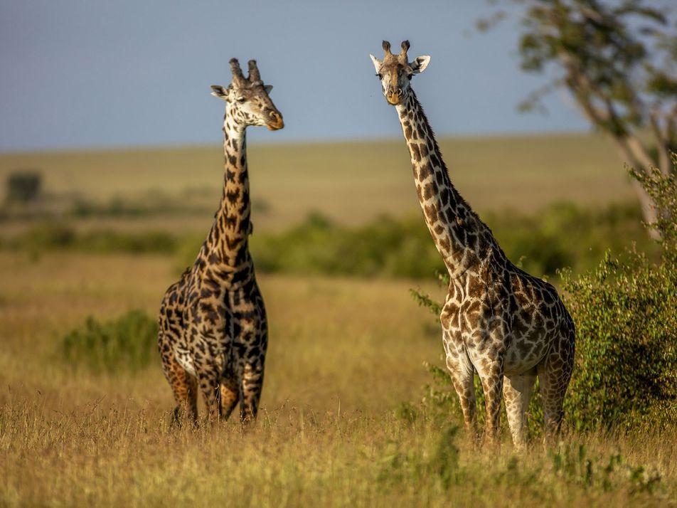 CLOSED: Win a six-night safari in the Maasai Mara