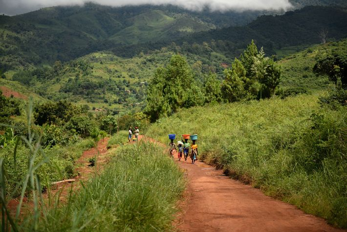 The Malawi Youth Forest Restoration Programme has helped to safeguard biodiversity by restoring two million hectares.