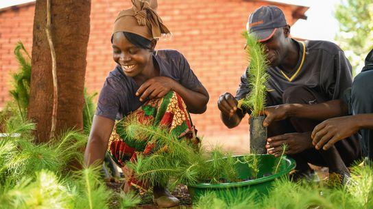 Mkandizi Youth Club members working to increase sustainability efforts in Rumphi, Northern Malawi.
