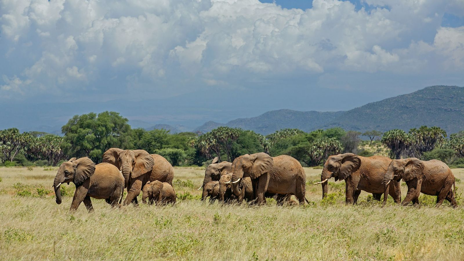 Amity and her family is one of the many families of wild elephants that zoologist Iain ...