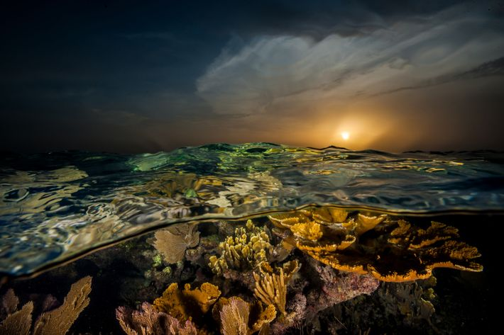 Sunset casts a golden glow over corals flourishing off the country's southern coast. Named by Christopher ...