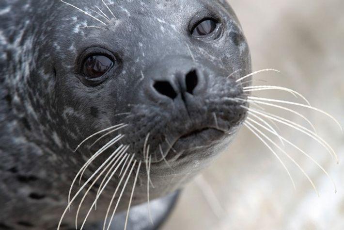 Cornish Seal Sanctuary. Image: Getty