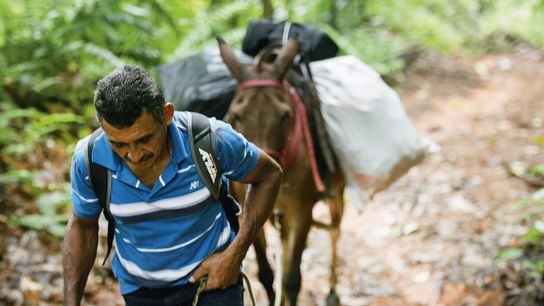 A local treks with a donkey