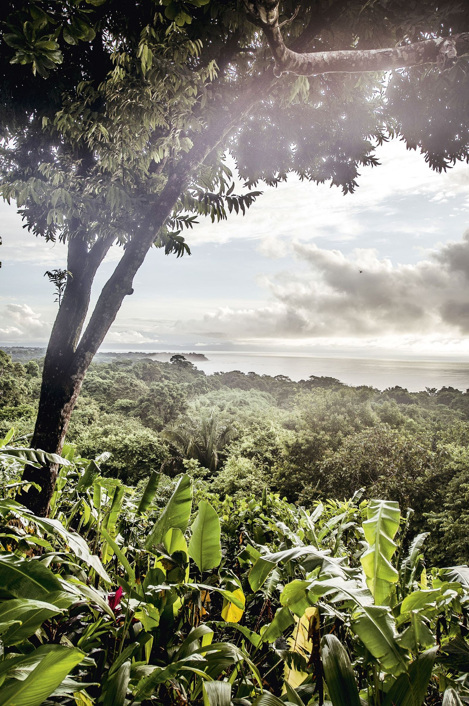 In pictures: wild corners of Costa Rica