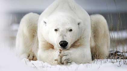 Canada: Caution! Bears crossing