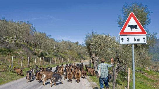 Rush hour on the back roads of Sicily