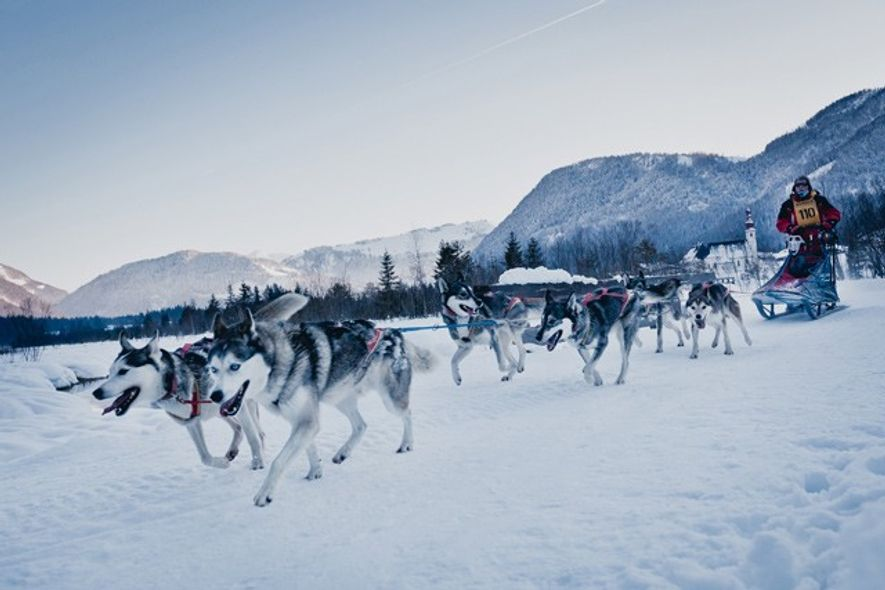 Dog sledding in the Kitzbühel Alps.