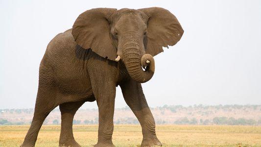 Levison Wood on walking with elephants in Botswana
