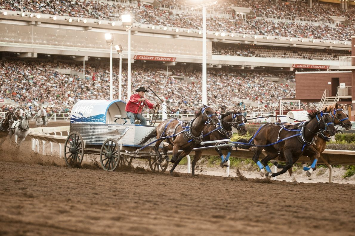 The Calgary Stampede is an annual rodeo, exhibition and festival held every July in Calgary.