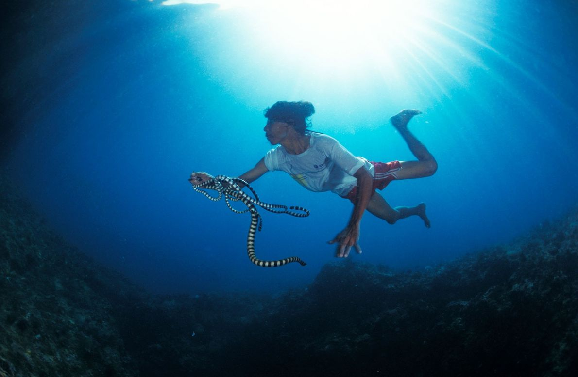 A fisherman in the Philippines catches a snake underwater near Gato Island.