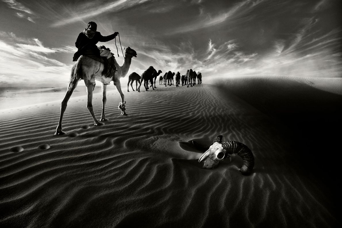Travellers pass an animal skull as they ride camels through northern Kuwait.