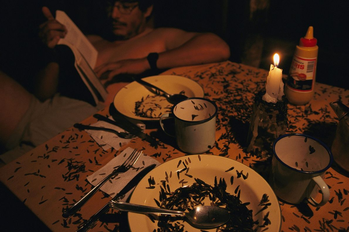 Termites crawl across a table inside a dining tent at Bolivia's Madidi National Park, while a ...
