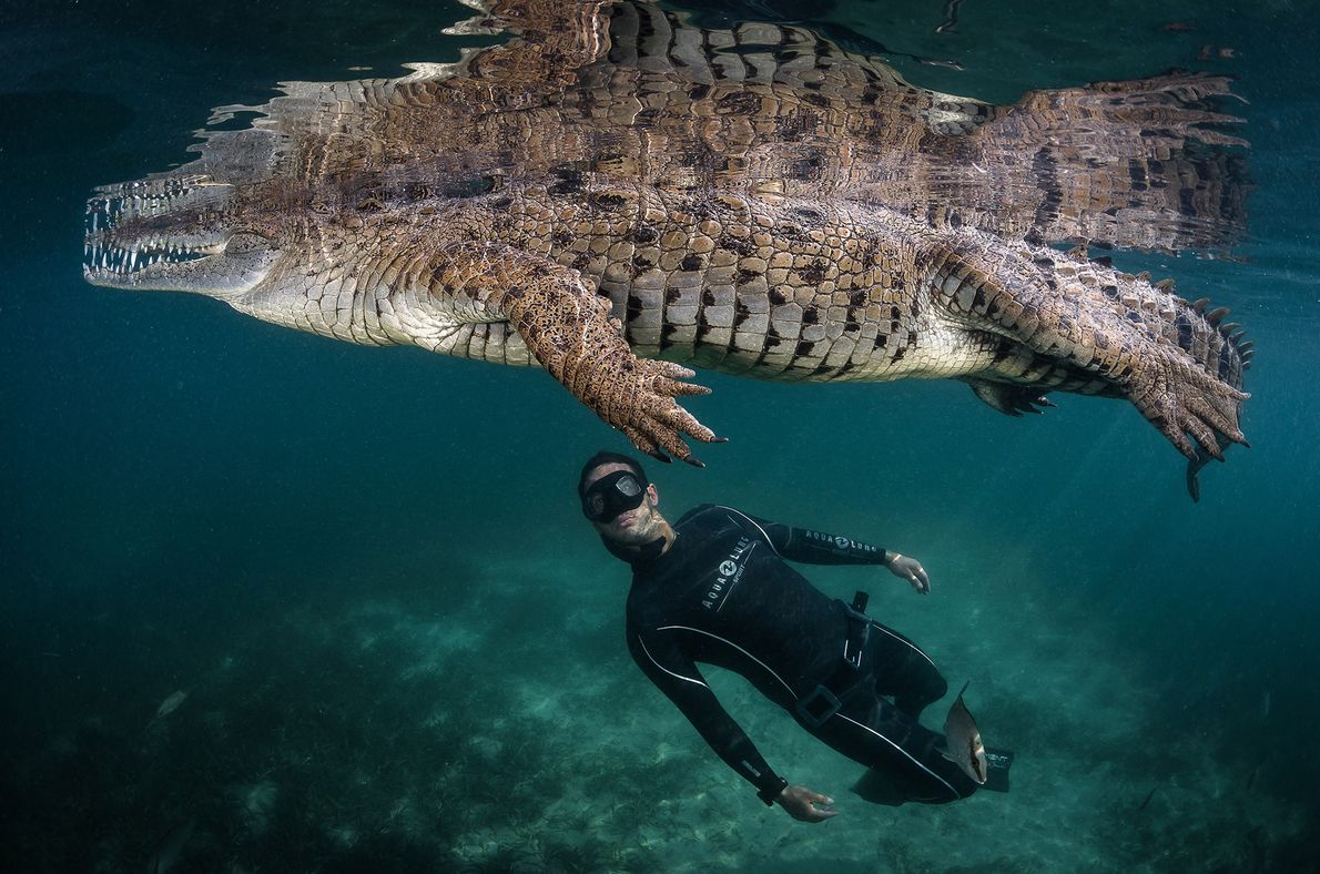 Lecoeur focuses his work on environmental issues, including illegal hunting and habitat depletion of American crocodiles. ...